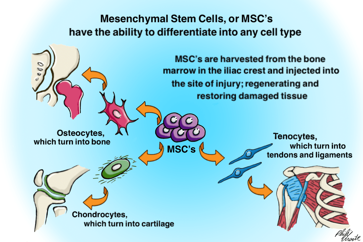 What Is Stem Cell Therapy Physio Logic Nyc
